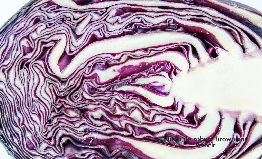Salade au chou rouge